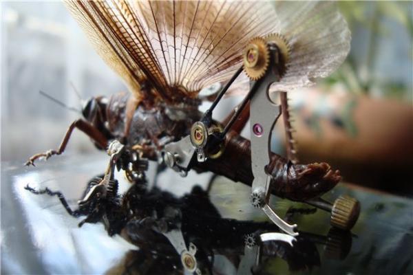 На тему насекомых (Фото 14)