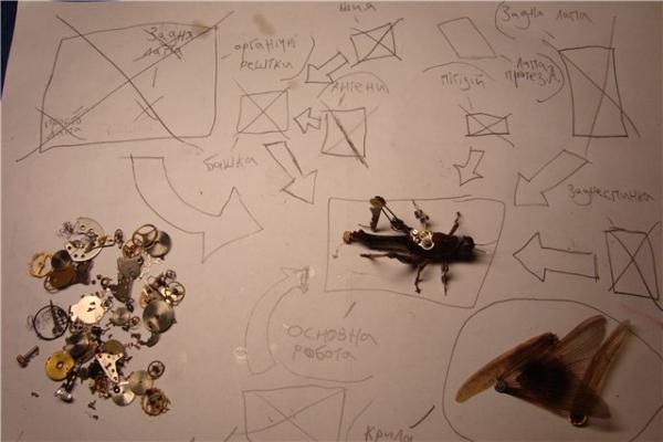 На тему насекомых (Фото 7)
