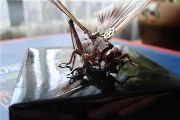 На тему насекомых (Фото 12)