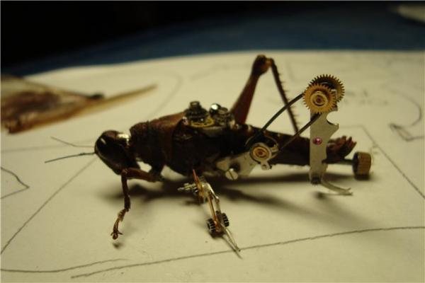 На тему насекомых (Фото 9)