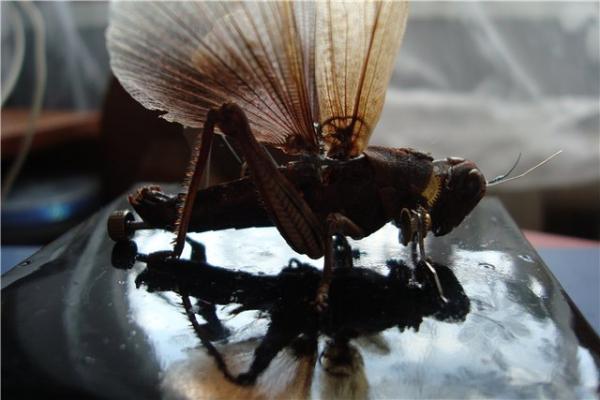 На тему насекомых (Фото 11)