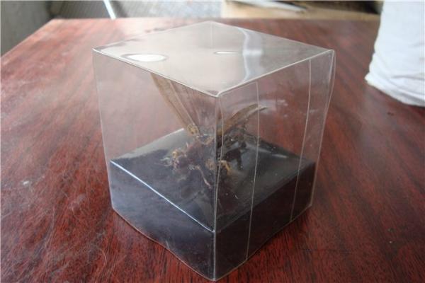 На тему насекомых (Фото 15)