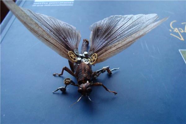 На тему насекомых